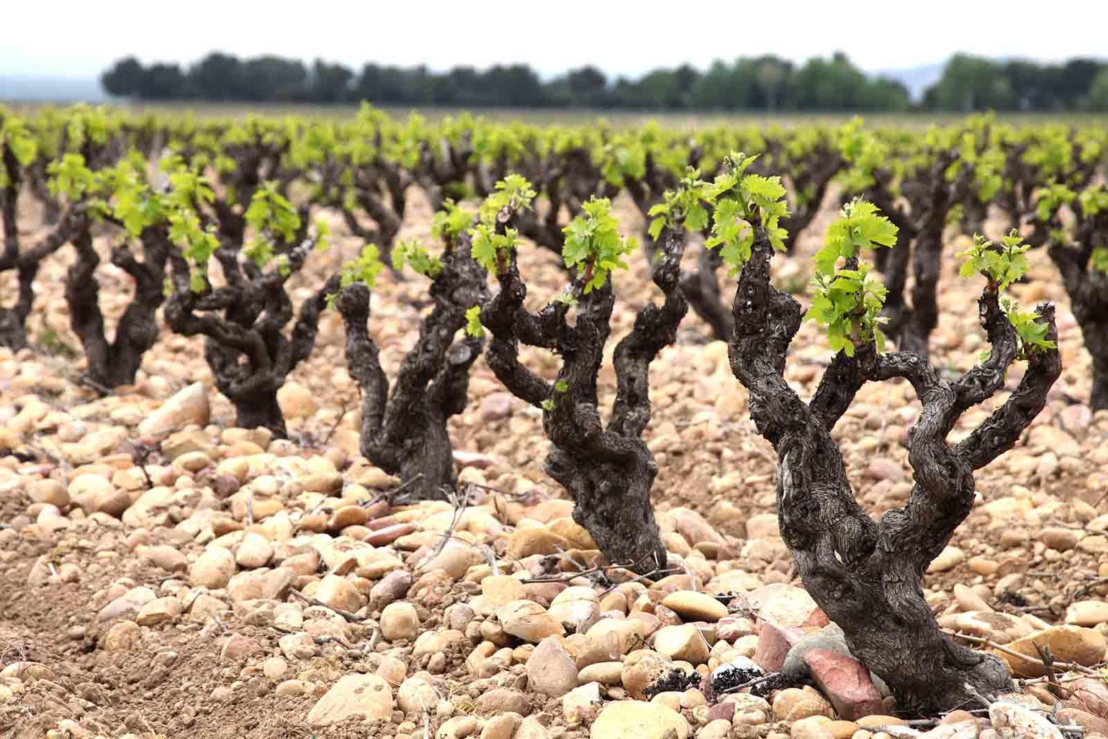 Terroir bij wijn Chateauneuf du Pape