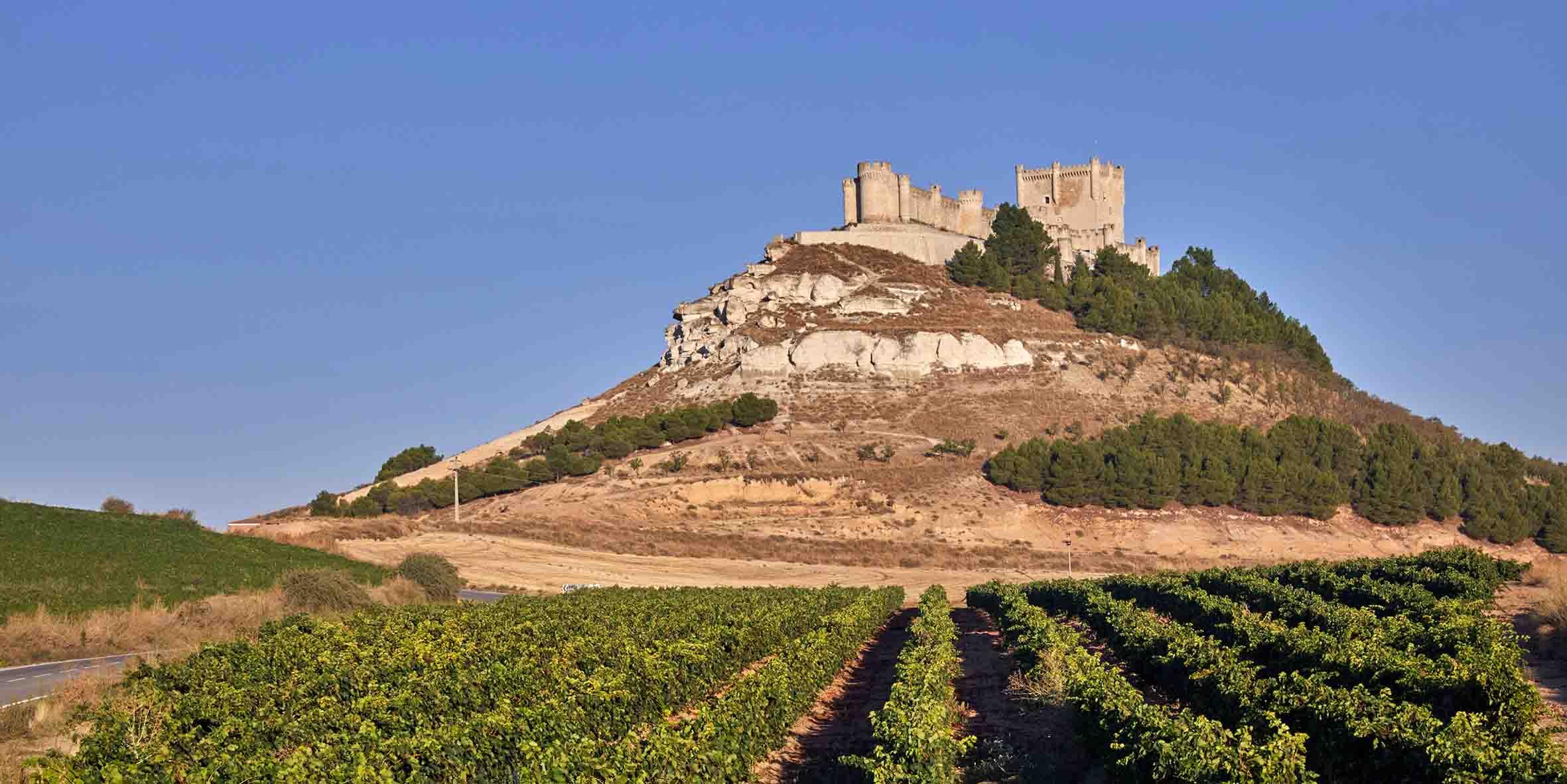 Castilla y Leon wijngaard
